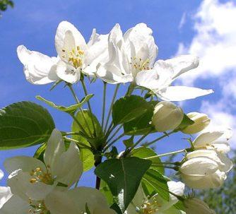 Навруз Цветы